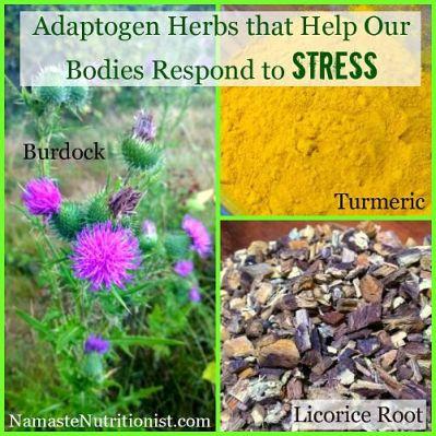 adaptogen-herbs-article