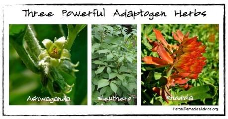 Adaptogen-Herbs