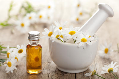 chamomile-herb-opt