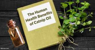 health-benefits-of-catnip-oil-fb