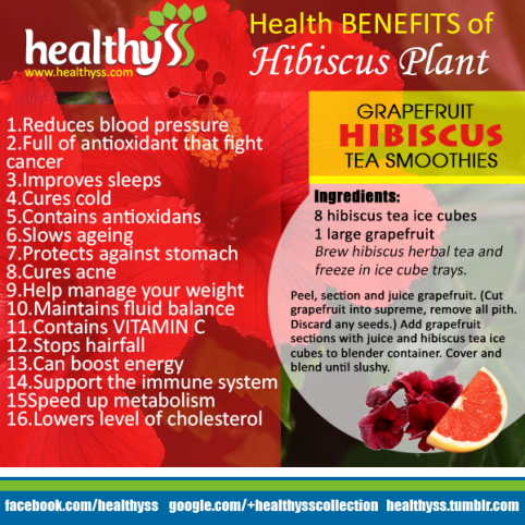 images_articles_herbs_16_health_benefits_of_hibiscus_plant_Hibiscus_Plant