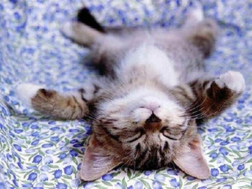 napping_cat