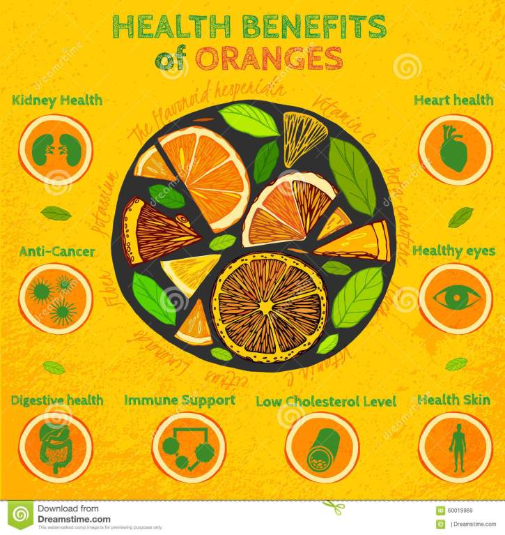 orange-health-benefits-graphic-vector-illustration-beautiful-hand-drawn-infographics-fresh-oranges-textured-60019969